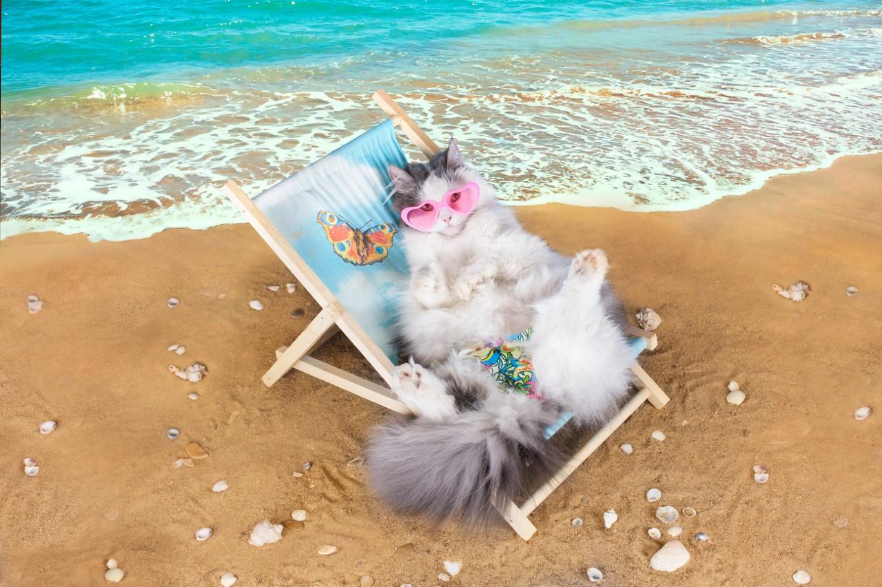 С отпуском картинки прикольные с кошками, для