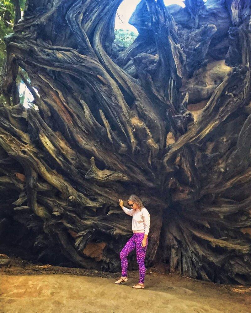 Невероятно, но это корни одного дерева! катаклизмы, природа, растительность