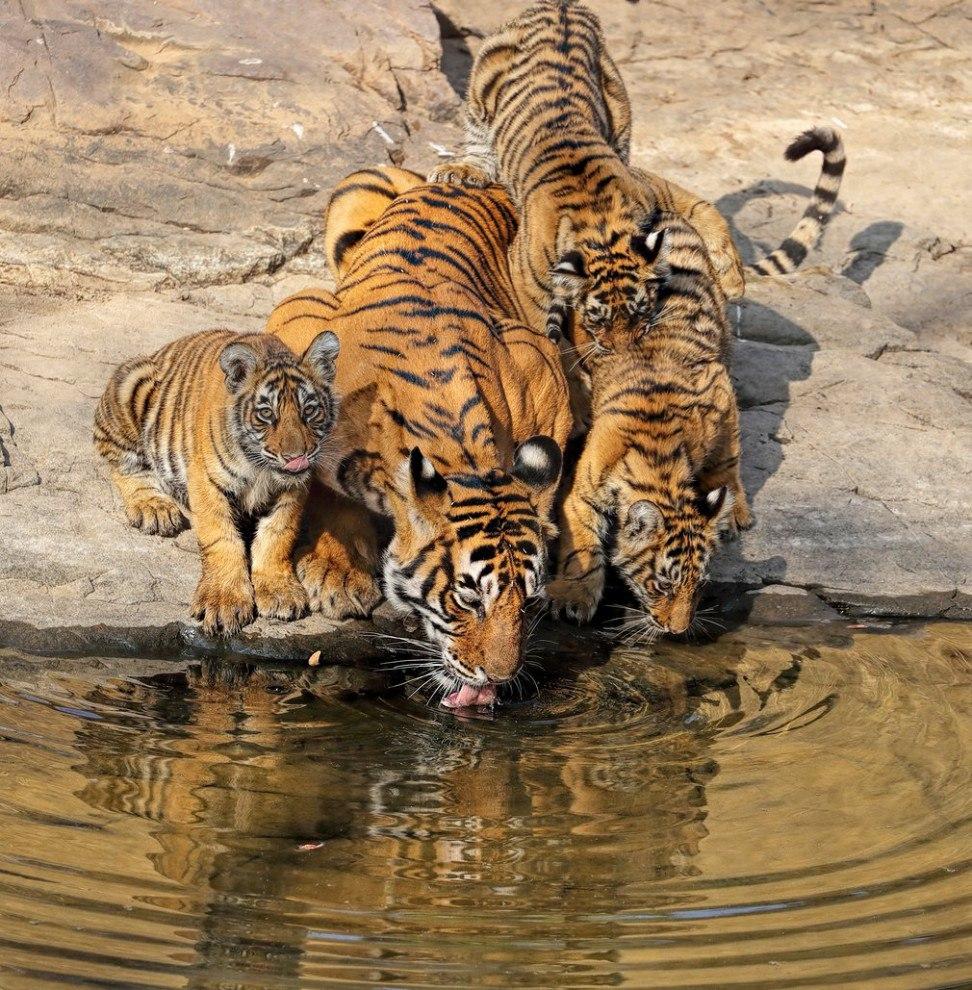 Фото разных диких животных мира