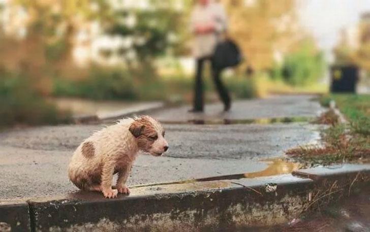 Отношение к животным — показатель человечности?