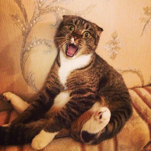 Смешные звуки издаваемые котами в различных ситуациях (видео)