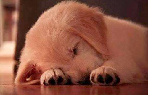 Очаровательные щенята, которые растопят ваше сердце (35 фото)