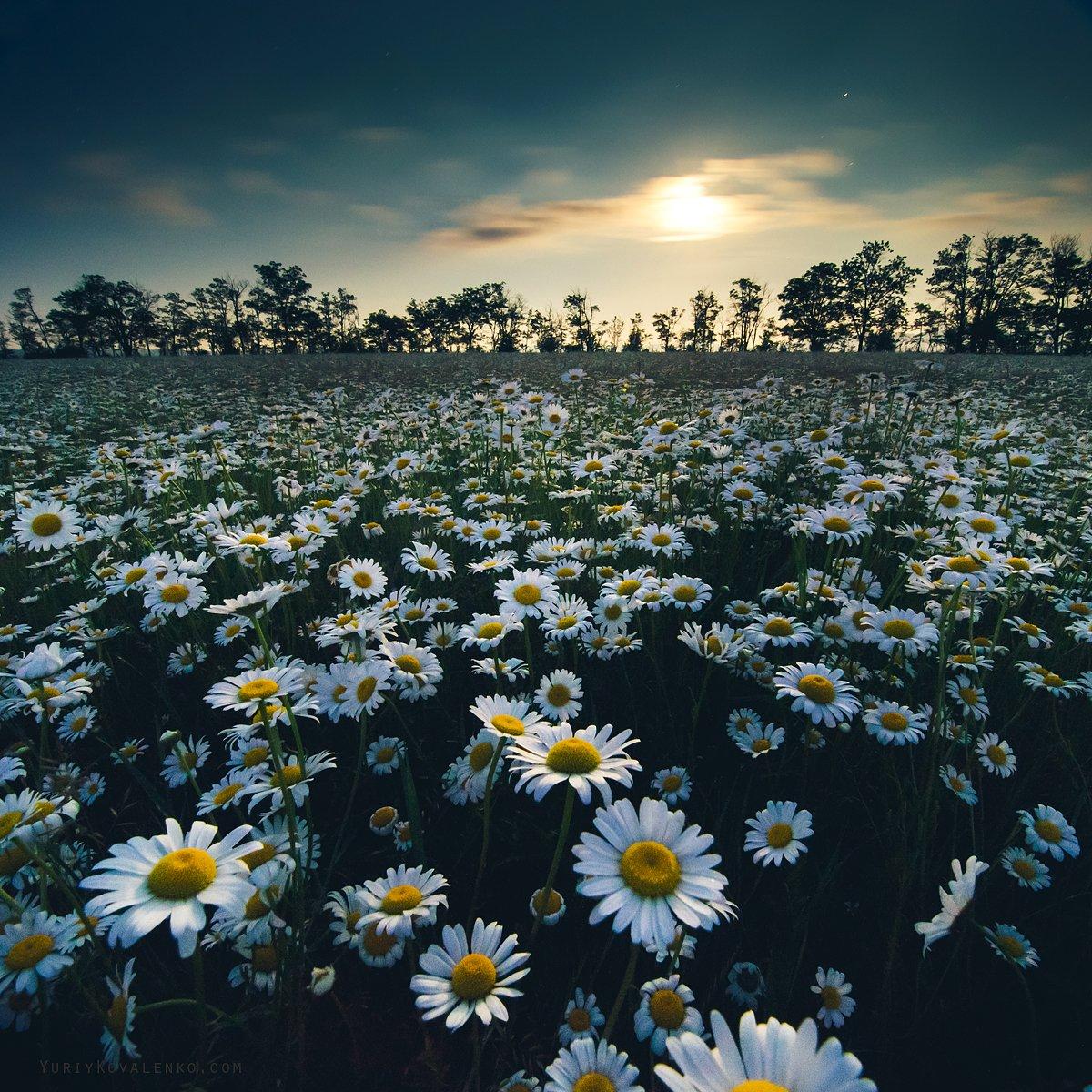 Луга на родине моей цветами разодеты! природа