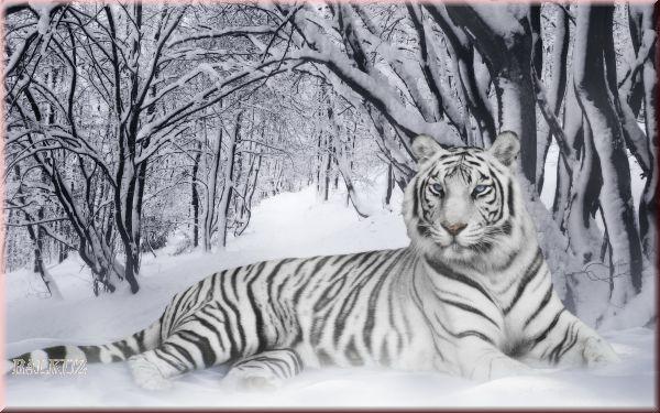 "Помогите найти схему ""Белый тигр""."