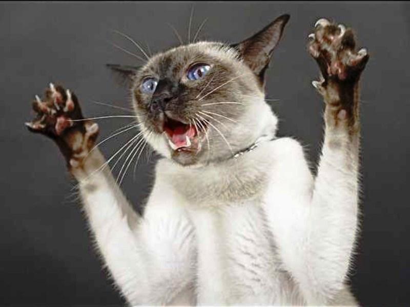 Почему кошка стала агрессивной? Чего вы еще не знаете о лошадях?