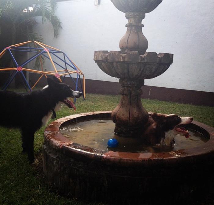 Она сама рада лишний раз искупаться банный день, ванна, животные, купание, шок