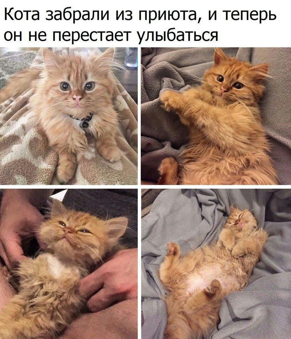 Гиф, смешные фото животных с подписями новые очень смешные