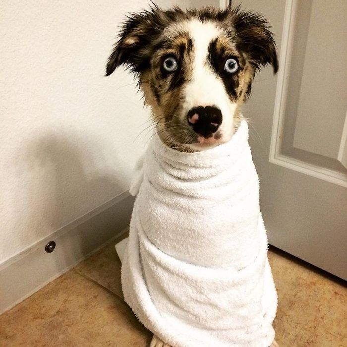 После первой бани: он никогда не будет прежним... банный день, ванна, животные, купание, шок