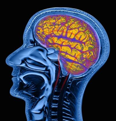 20 фактов о мозге