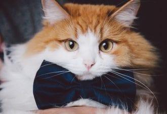 Как кот Ферапонт хозяйку замуж выдал юмор