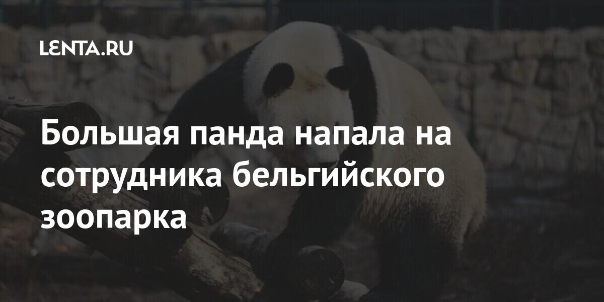 Большая панда напала на сотрудника бельгийского зоопарка Из жизни