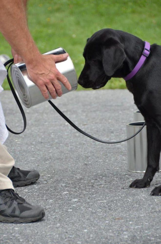 Собака прошла обучение в ЦРУ…