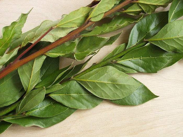 Что может лечить лавровый лист - 8 рецептов