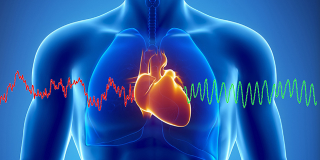 Энергия сердца. Как заставить сердце работать на вас?