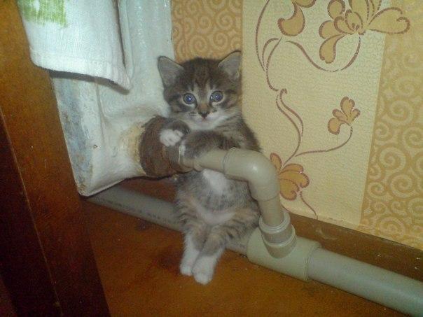 Когда берете котенка, учтите, что хорошенький маленький пушистый комочек - это, максимум, на полгода. А дальше - наглая зажратая морда анекдоты,веселые картинки,юмор