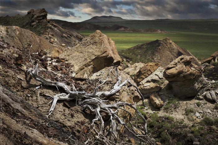 Высохший черный саксаул на вздыбленных вулканических породах. / Фото: Юля Назаренко.
