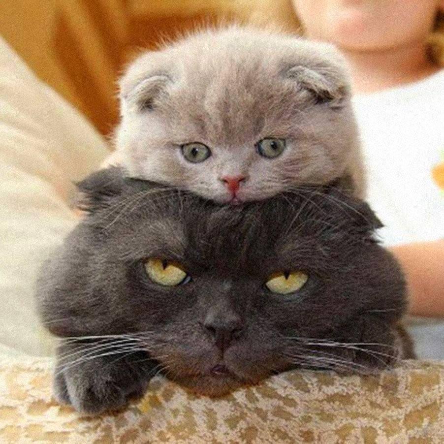 Самые смешные котята картинки