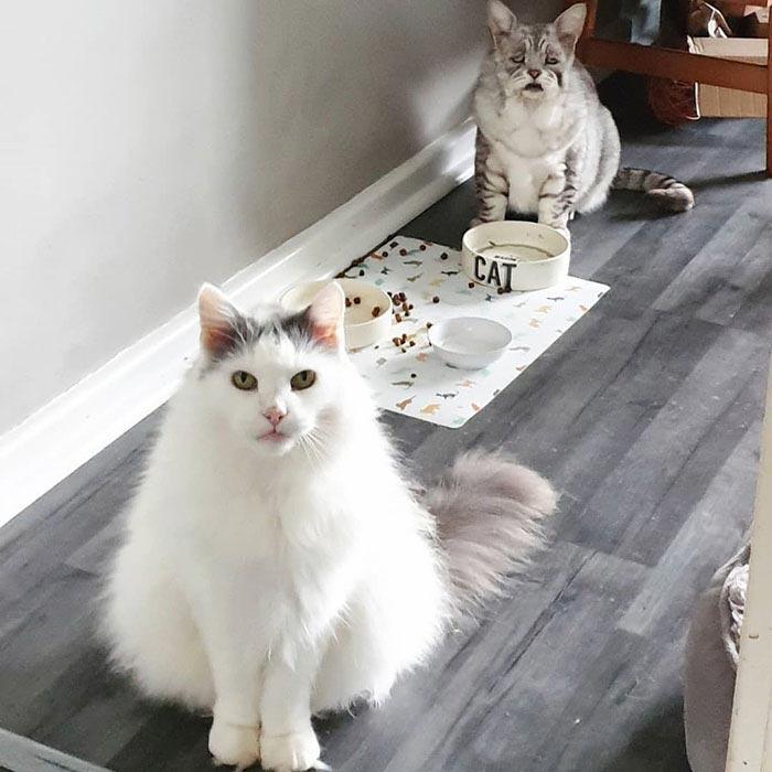 Тоби — кот с обвисшей кожей, который, наконец, нашёл свой любящий дом и теперь счастлив
