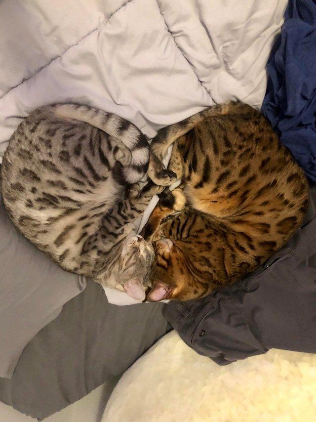 12. Котейки в форме сердечка животные, кошка, милые, собака, фото