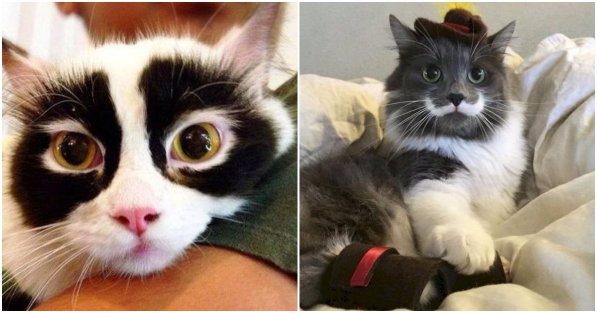 20+ кошек, окрас которых вас удивит