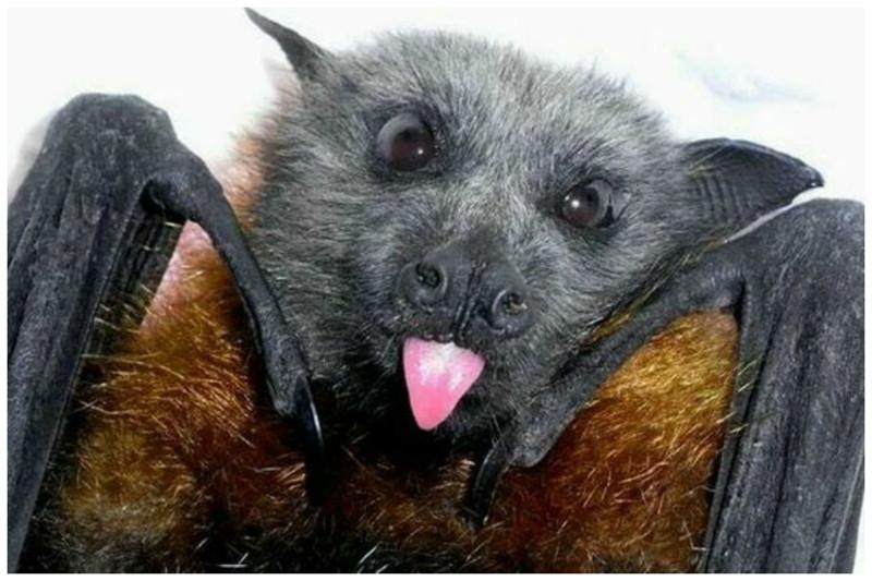 Интересные факты о самых милых животных - летучих мышах
