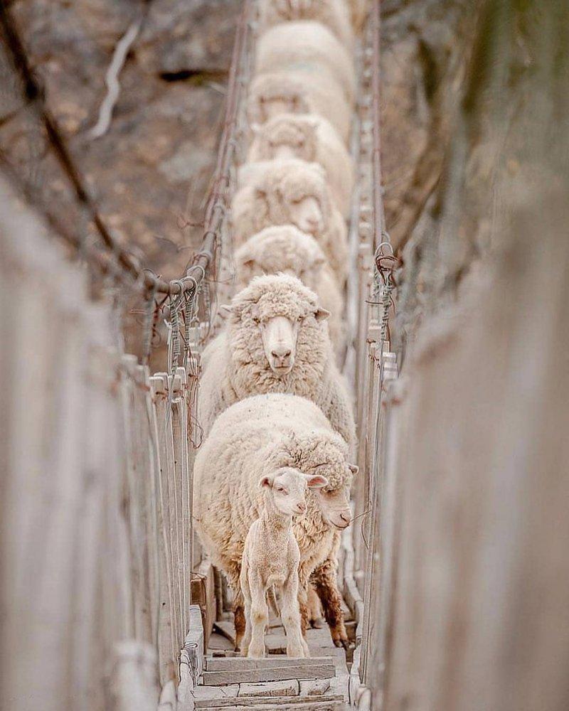 13. Идут через мост животные, кошка, милые, собака, фото
