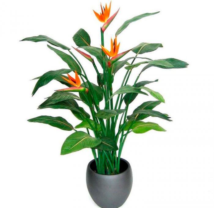 Интернет магазин экзотических растений феникс, свадебный букет