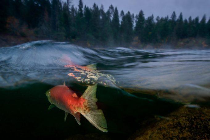 15 невероятных, удостоенных наград подводных фотографий, которые захватят дух