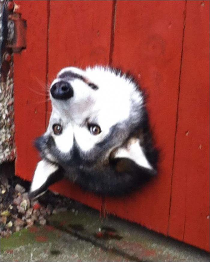 20 собак, которые хотели сказать «привет!»