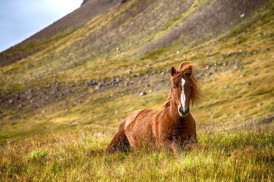 образом дикая лошадь картинка герои нравились, какие