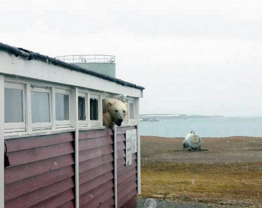 Остров Шпицберген: белый мед…
