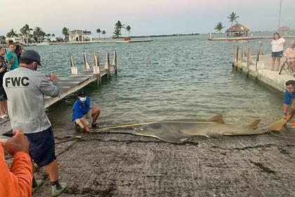 Самую большую в истории рыбу-пилу нашли мертвой