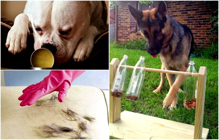 Советы, которые стоит взять на заметку всем владельцам собак