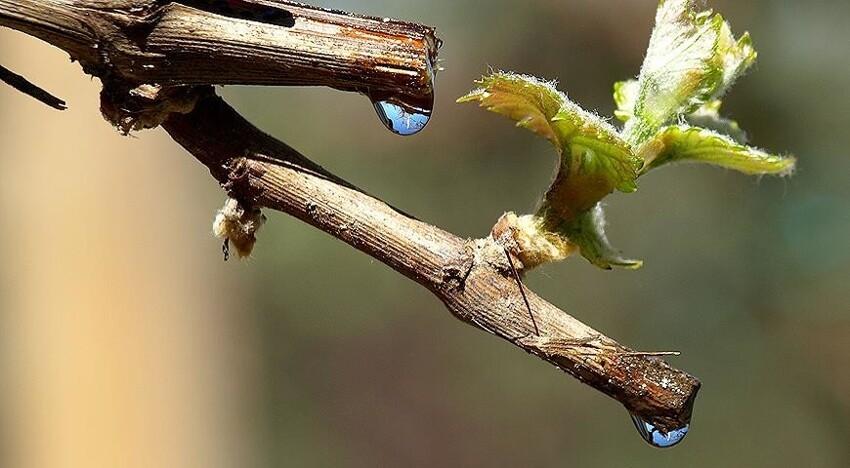 10 растений, дающих полезный сок интересное,природа,растения,факты