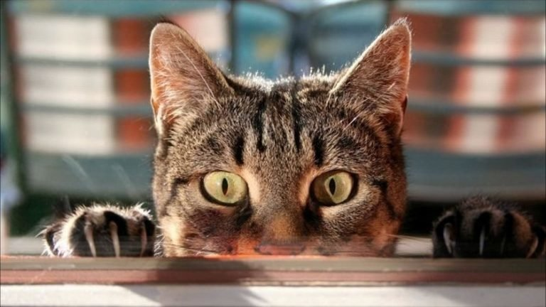 10 кошачьих секретов, о которых вы не догадывались