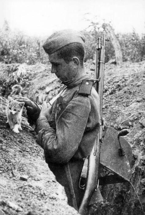11. Русский солдат на передовой гладит кошку, 1941-1945 архив, исторические фото, фото, фото из прошлого