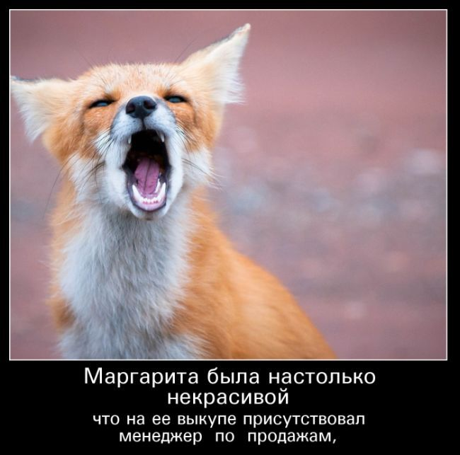 Позитивные, смешные и веселые демотиваторы для поднятия настроения демотиваторы свежие,картинки с надписями,смешные демотиваторы,смешные комментарии,юмор