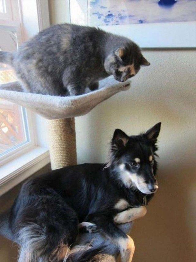 Смешные собаки, которые думают, что они кошки