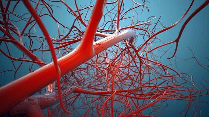 Общая протяженность кровеносных сосудов человека - почти 100 тысяч километров! интересно, познавательно, тело, факты