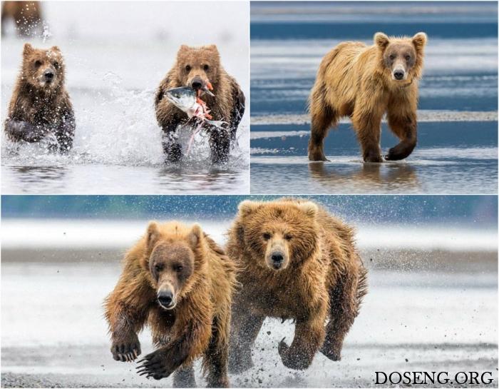 Мать-медведица защитила медв…