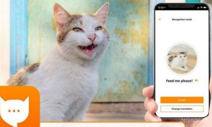 В Google Play появился переводчик с кошачьего языка