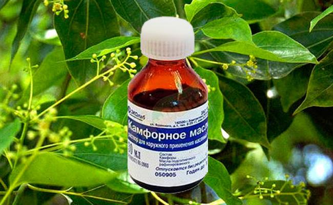 Чем полезно камфорное масло для человека
