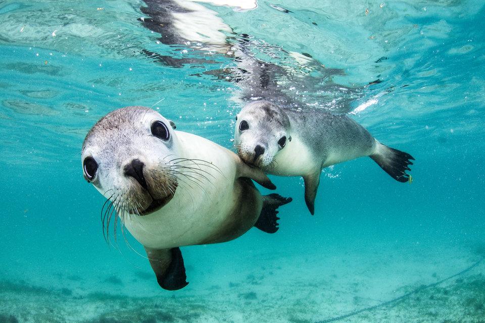 15 невероятных, удостоенных наград подводных фотографий, которые захватят дух животные