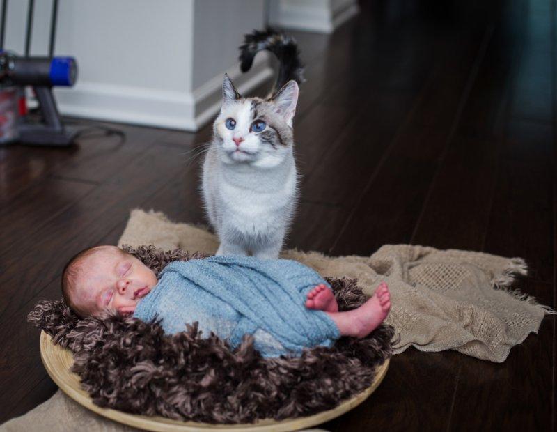 Тише, дитё мне разбудишь! дети, дружба, животные, кошки, ребенок, собаки