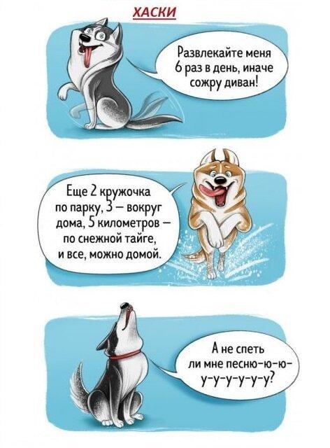 Весёлый гид по породам собак…