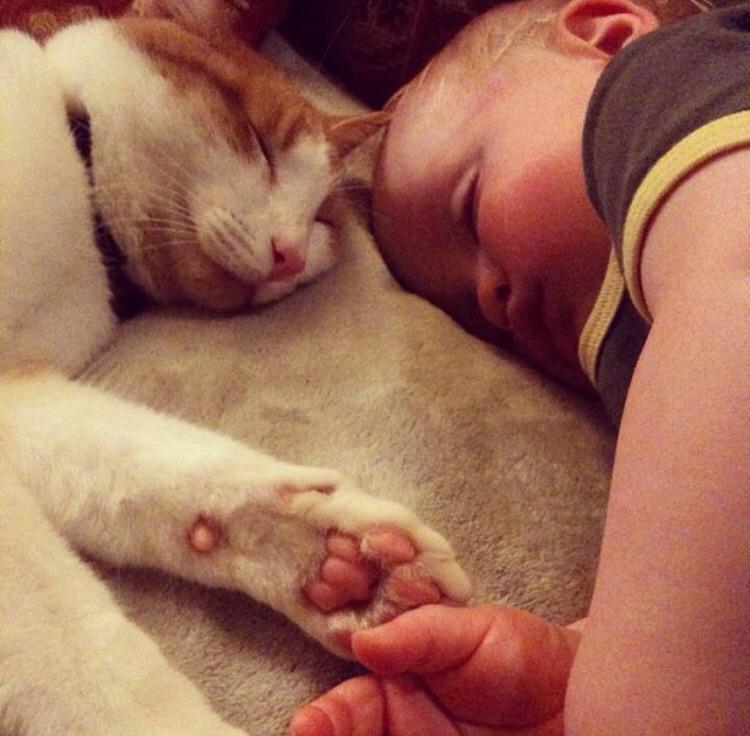 Совместный сон - признак крепкой дружбы и доверия. дети, дружба, животные, кошки, ребенок, собаки