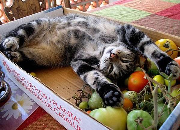 Британцев за попытки сделать из кошек вегетарианцев могут привлечь кответственности
