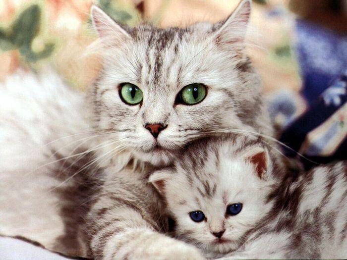 Мама-кошка у Детдома (Сергей Анатольевич Плотников)