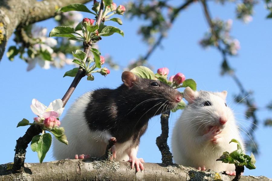 Смешные картинки про весну с животными, картинки поржать