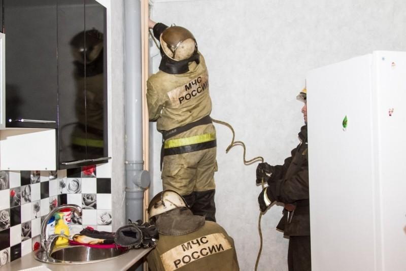 Сутки заточения. В Омске спасатели достали енота Элли из вентиляционной шахты
